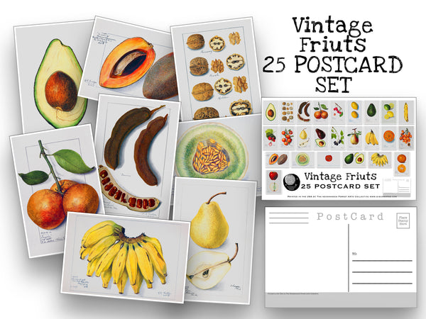 Vintage Fruits Postcard Set - Set of 25 Postcards - Vintage botany - Scrapbooking Post Cards - plant drawings - Natural Wonders - USDA Fruit