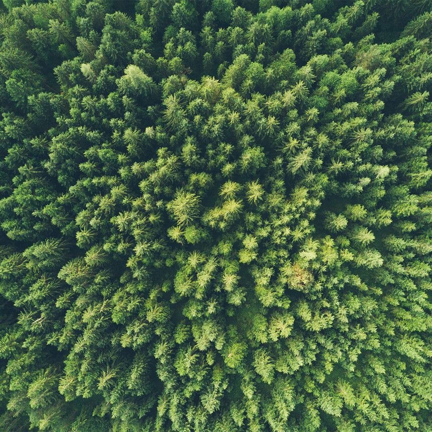 forest green aerial shot environment nature