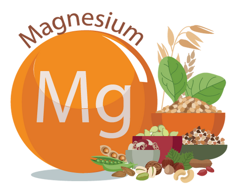 Magnesium and the Human Body