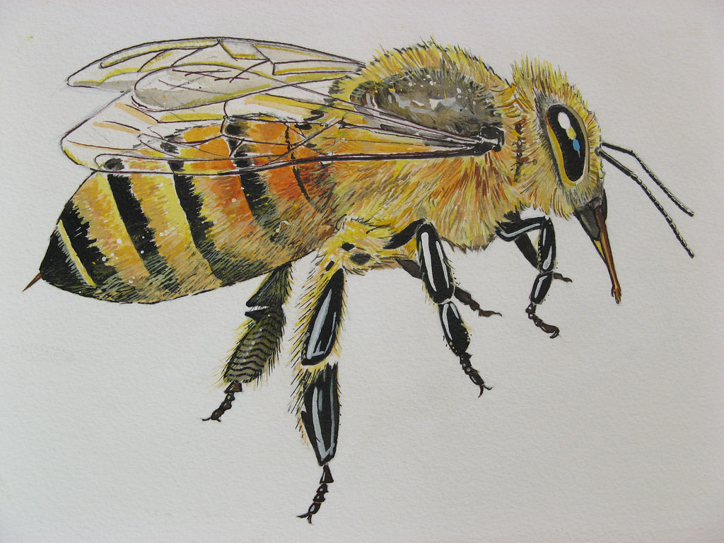 "On The Art Trail with Peter Buwalda; ""For the Love of Honeybees #1, Girls Rule!"""