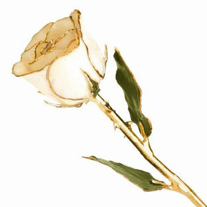LAQUER DIPPED 24K GOLD TRIMMED WHITE ROSE