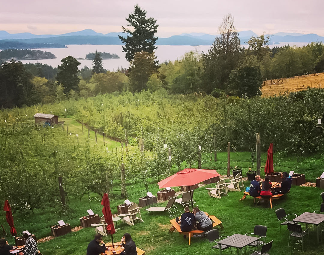 The Ciderworks orchard overlooking the ocean