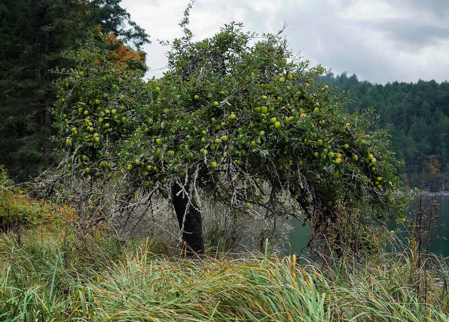 Twin Island Cider has many apply orchards including an original orchard that is decades old