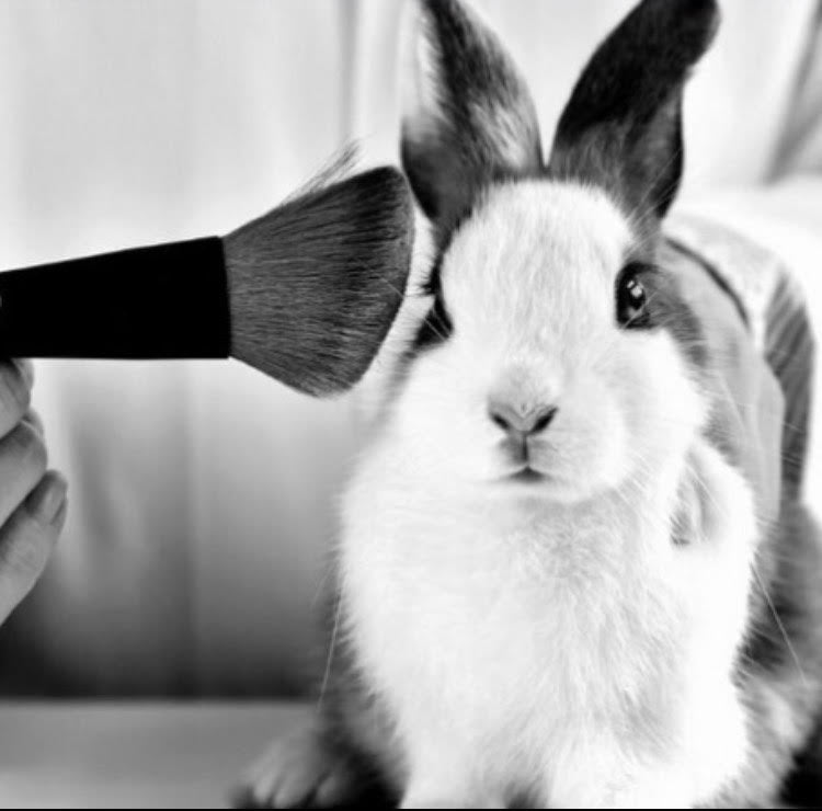 stopping animals testing