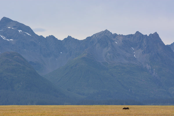 A bear in front of a mountain range