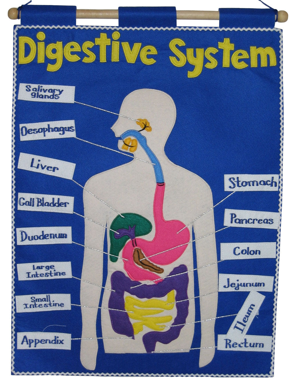 Digestive System - Fabric Wall Chart