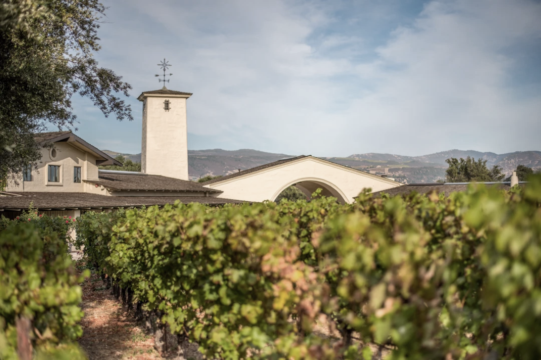 Looking over the tops of the vines to the iconic tower and arch of Robert Mondavi Winery.