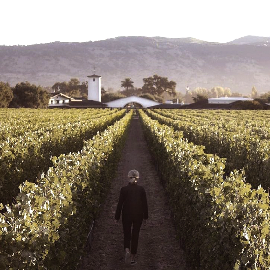 A woman walks down the rows between the grapevines in Robert Mondavi Winery's iconic To Kalon Vineyard.