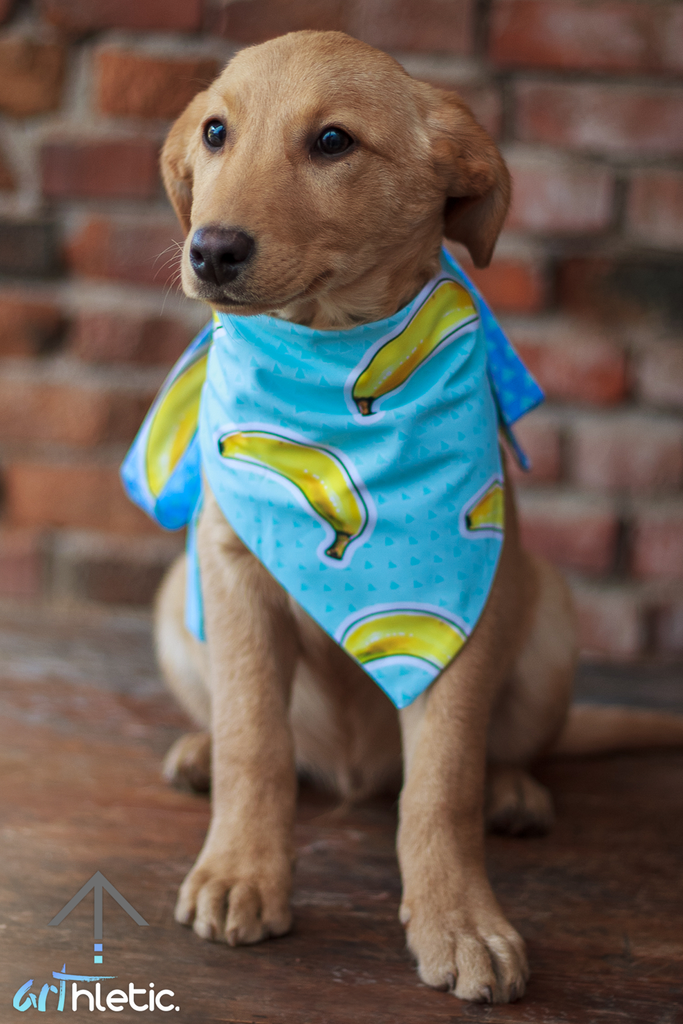 Banana Frenzy Bandana - Arthletic Wear