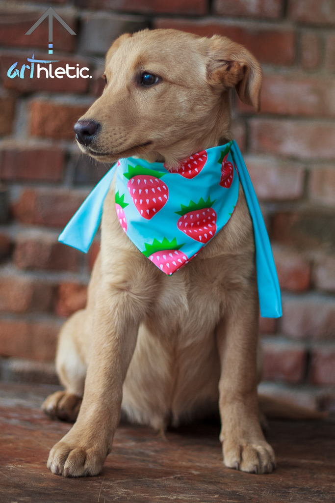Strawberry Parfait Bandana by arthletic-wear.myshopify.com I Pet bandana I