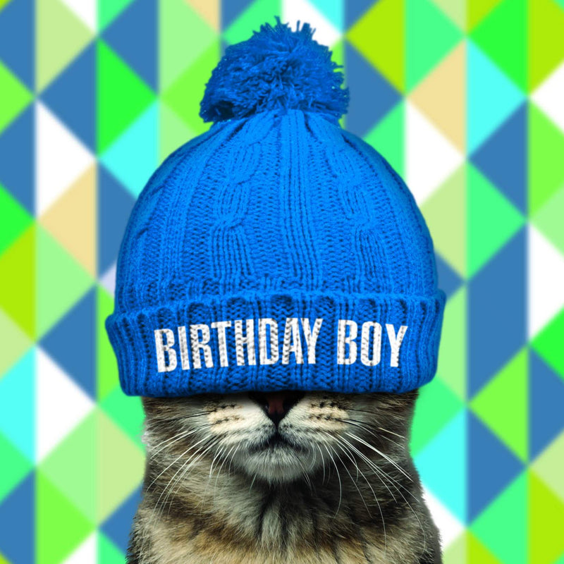 Cat in Blue Hat