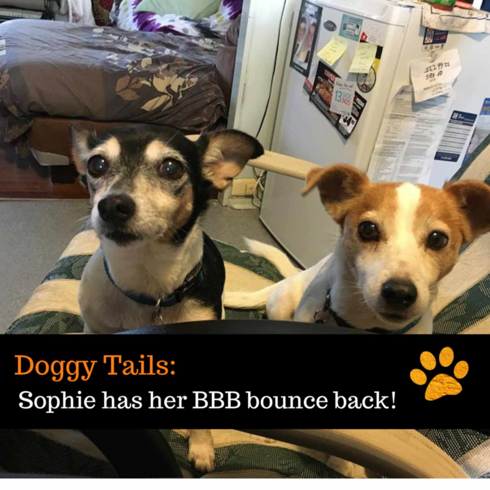 Sophie has her BBB bounce back!