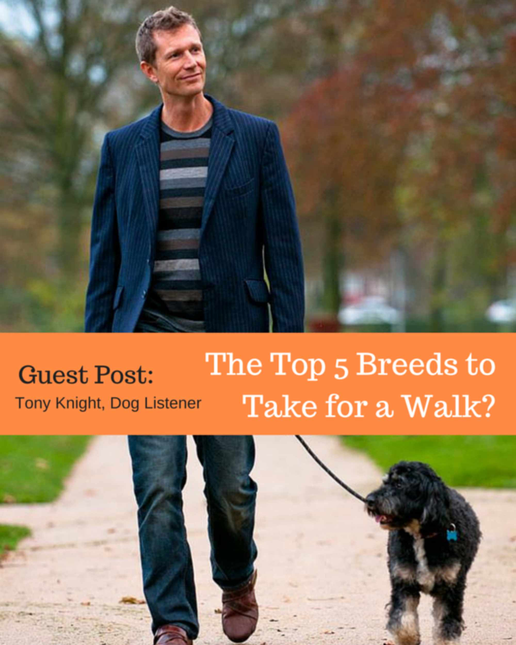 Guest Post: Top 5 Breeds to Take for a Walk?