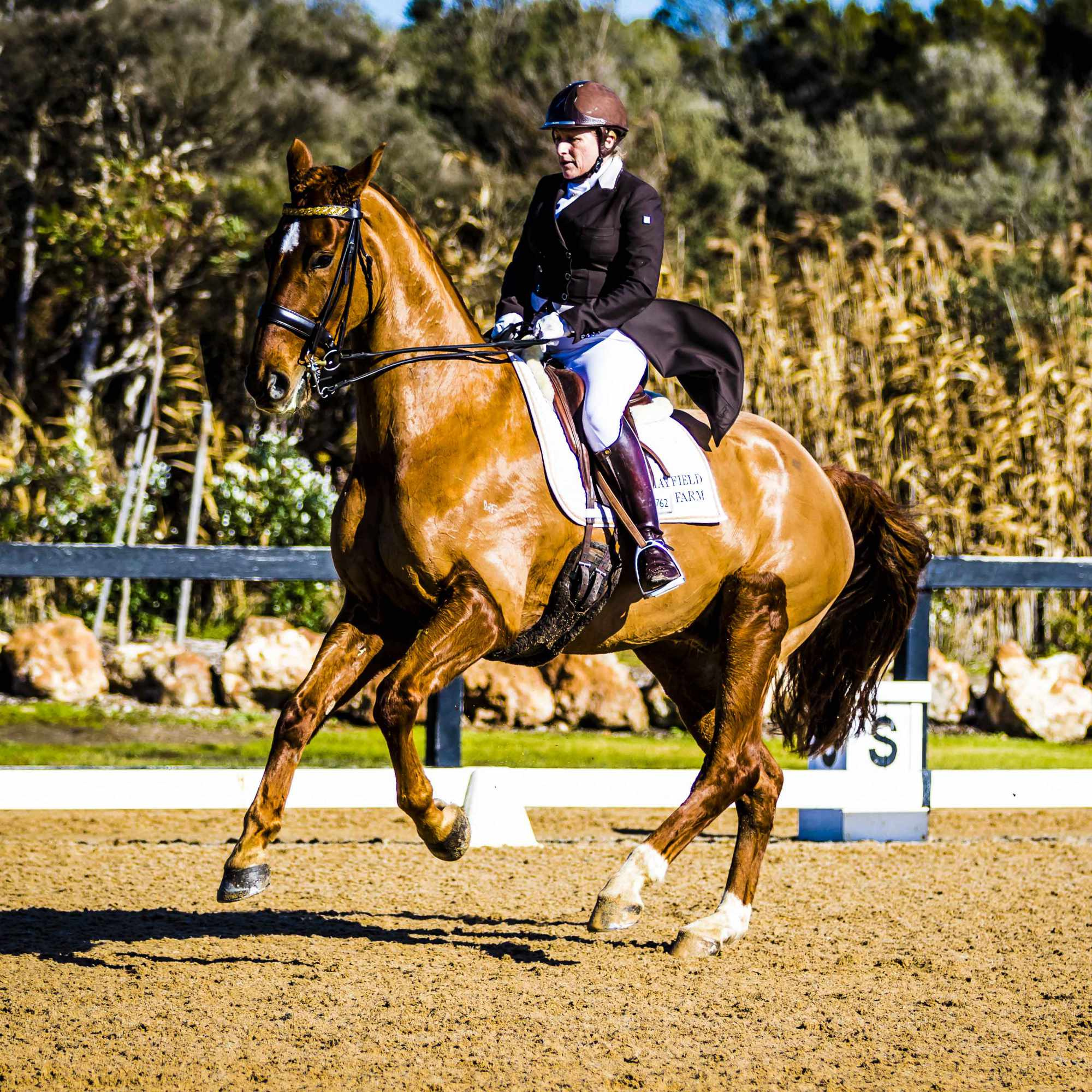 How is Rose-Hip Vital helping Kerry Mack and her horses?