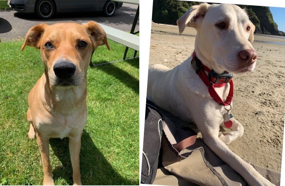 Mercy and Shiloh on Rose-Hip Vital Canine