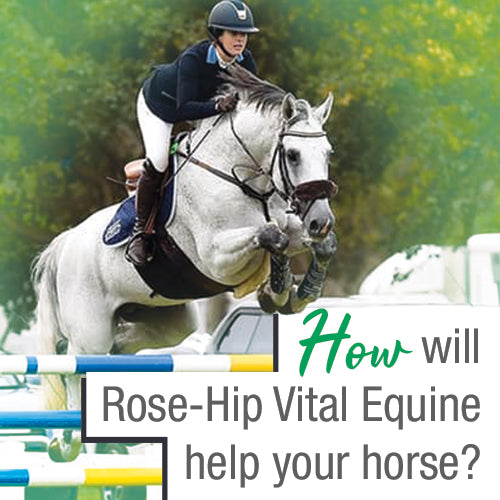 <center>How will Rose-Hip Vital help your horse?</center>