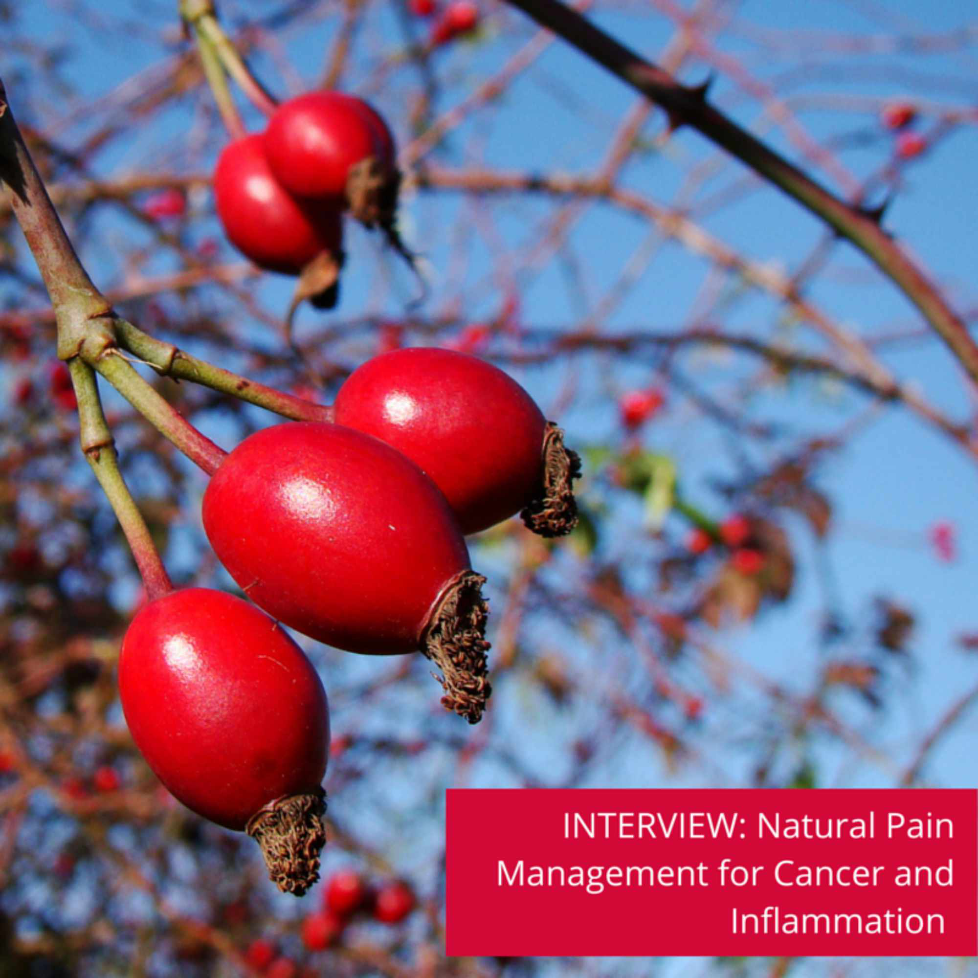 Breakthrough in natural pain management for cancer and inflammation