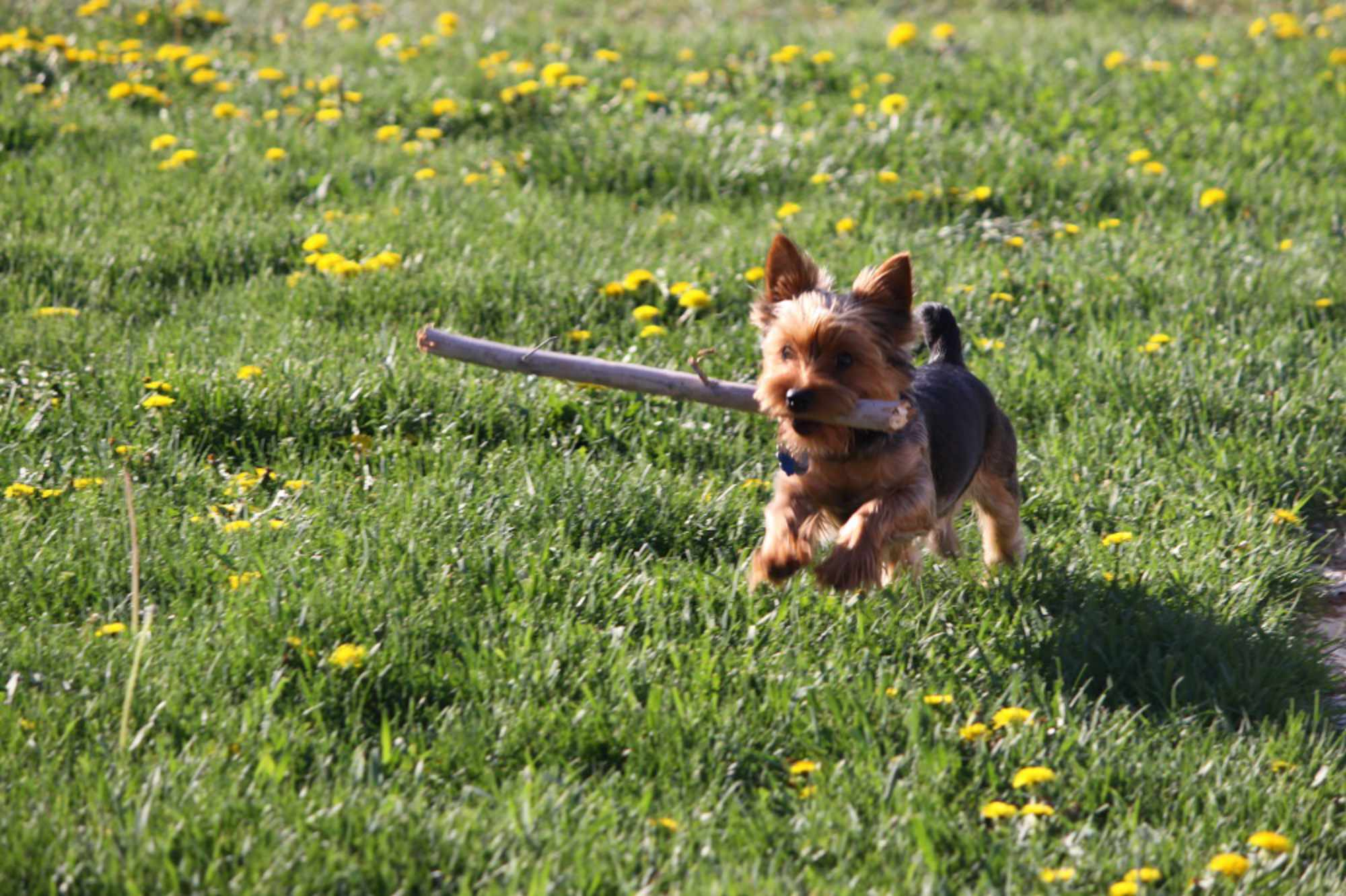 Tips from vet, Camille Brandt, on staying on top of your dogs health.