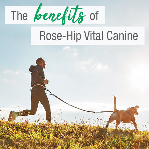 <center>What are the benefits of Rose-Hip Vital Canine?</center>
