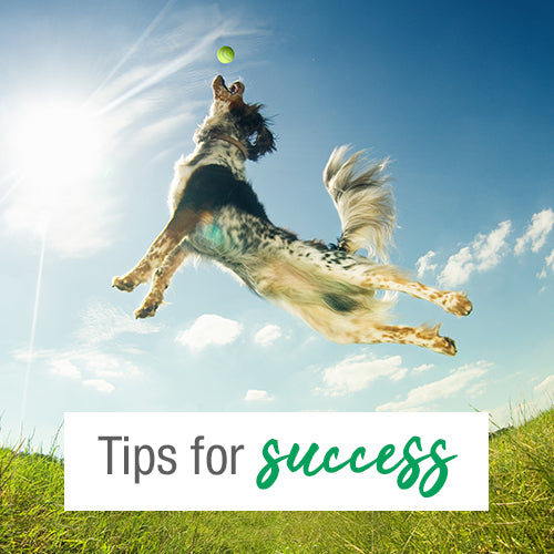 <center>Give your dog the greatest chance of success!</center>