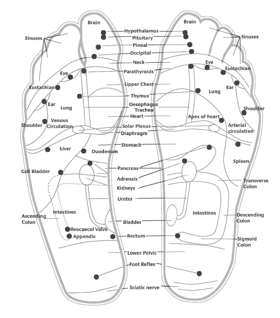 bodytox foot map - reflexology concept