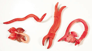 Lifecycle Replicas: Earthworm