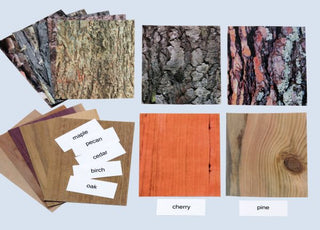 Trees: Bark & Grain Laminated Photo Cards & Labels