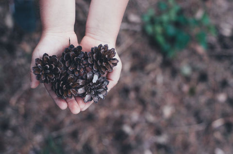 A child's hands cupping pinecones
