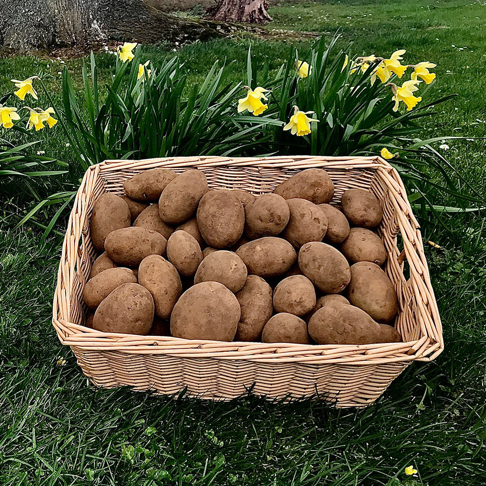 2kg Maris Piper Potatoes