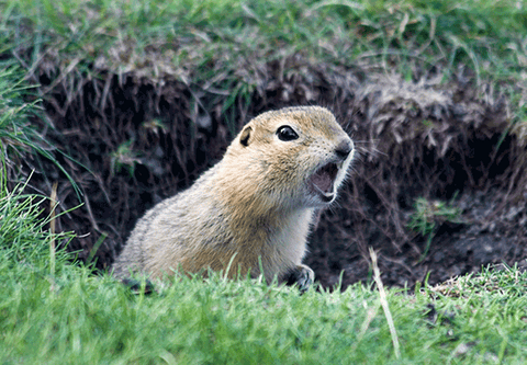 Do you have gophers