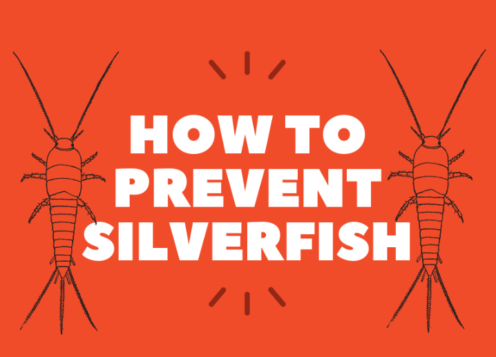 Prevent Silverfish Bugs