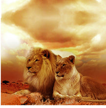 Upload image to gallery, Lions