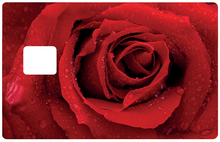 Upload image to gallery, Red rose