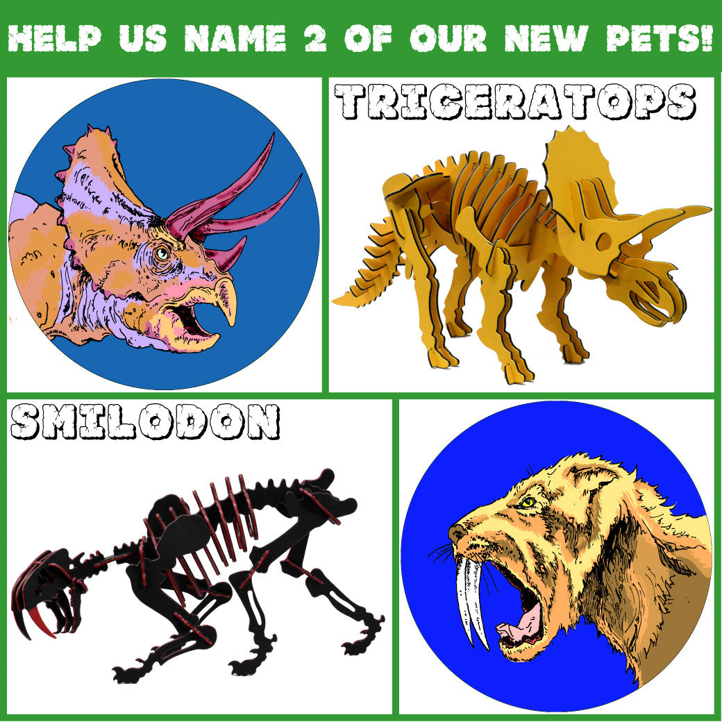 Help us name our new pets!