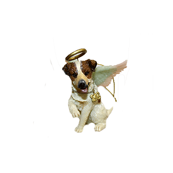 Jack Russell Angel Dog