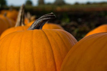 three-large-pumpkin-fall-background-www.rdalchemy.com