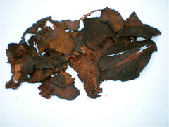 photo of fo ti-chinese herb-sexual aphrodisiac-www.rdalchemy.com