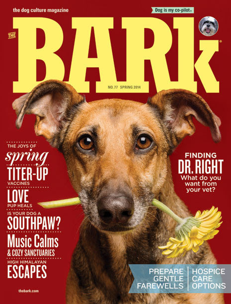The Bark Issue 77