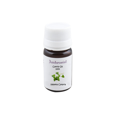 Ambrosial catnip Essential OIl Nepeta cataria 10% Natural
