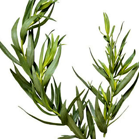 Ambrosial Tea Tree Essential Oil 100% Natural Undiluted Melaleuca Alternifolia
