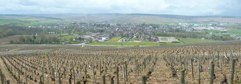 Great place for a picnic lunch - the view from the top of grand cru Les Clos towards Chablis