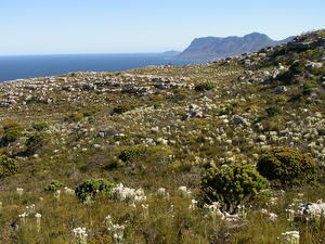 Cape Point from the top of Kalk Bay mountain