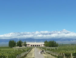 Salentein winery with the Andes behind
