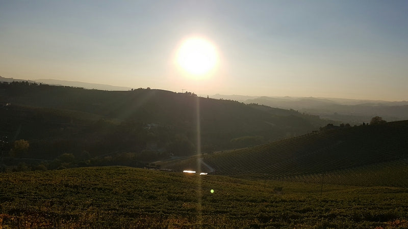 The View from the Rocca Winery