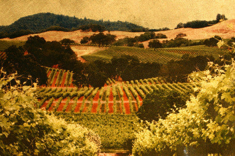 Russian River Valley Summer Study #2