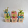 Air Plant Cube - NEW