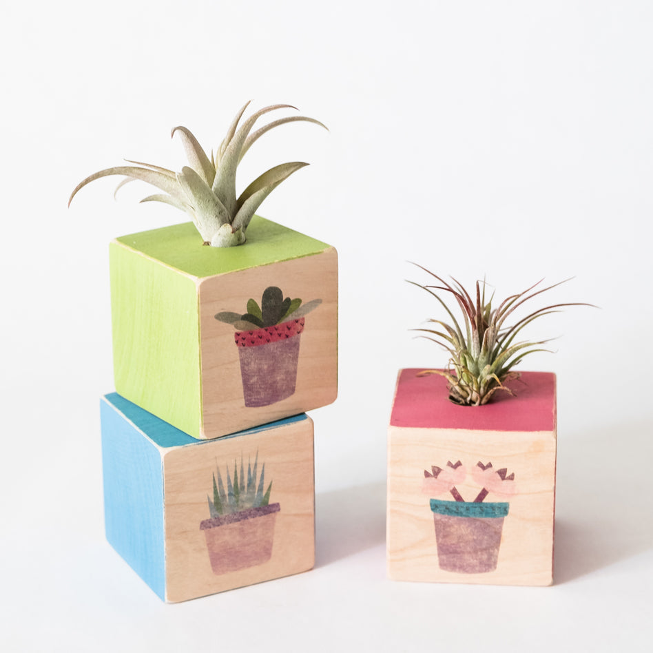 Air Plant Cube Succulents