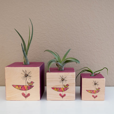 Air Plant Cube Mod Flower