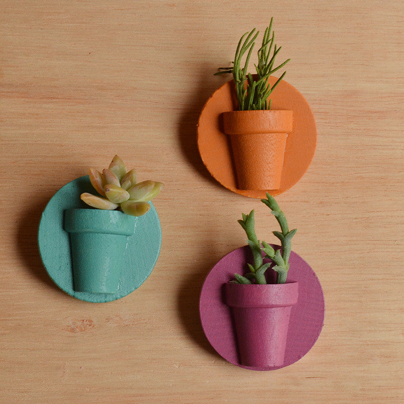 Potted Pin