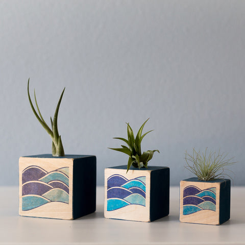 Air Plant Cube Waves
